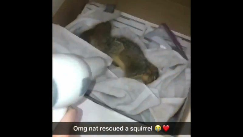 Illustration for article titled CMU Soccer Player Rescues Drowning Squirrel, Revives It With CPR Thanks In Part To The Office