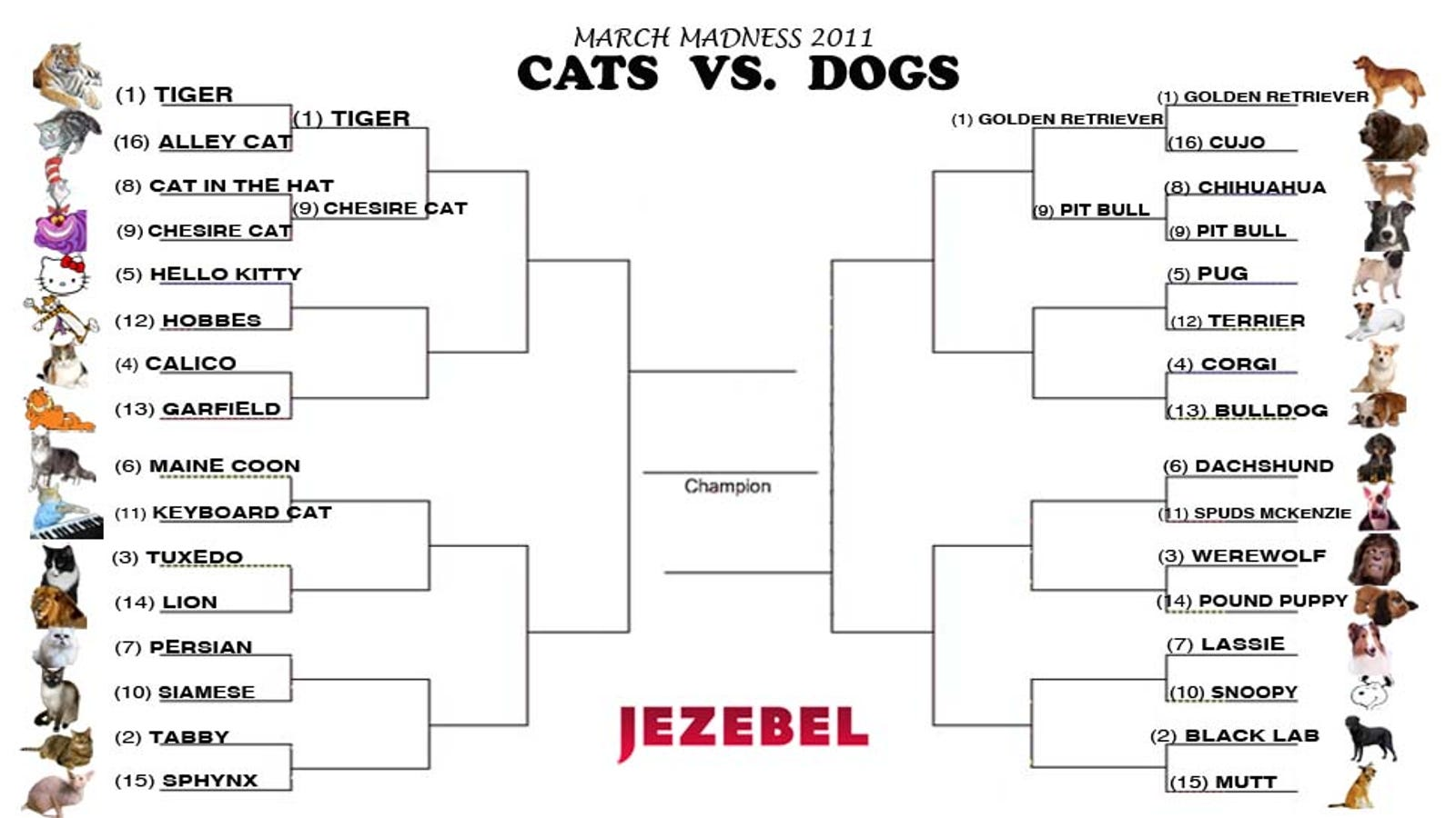 Cats Vs Dogs Cast Your Vote In An Intense Double Header