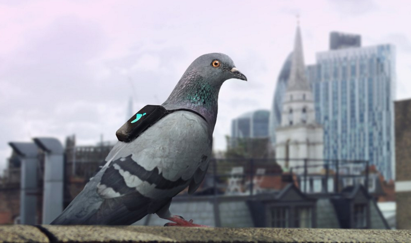 Illustration for article titled Sensor-Equipped Pigeons Are Tweeting About London's Air Pollution