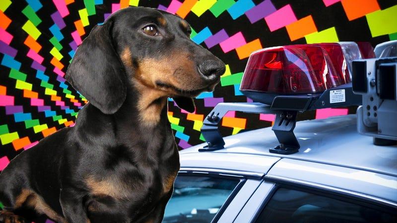 Illustration for article titled Dog fed LSD by nude couple survives car crash