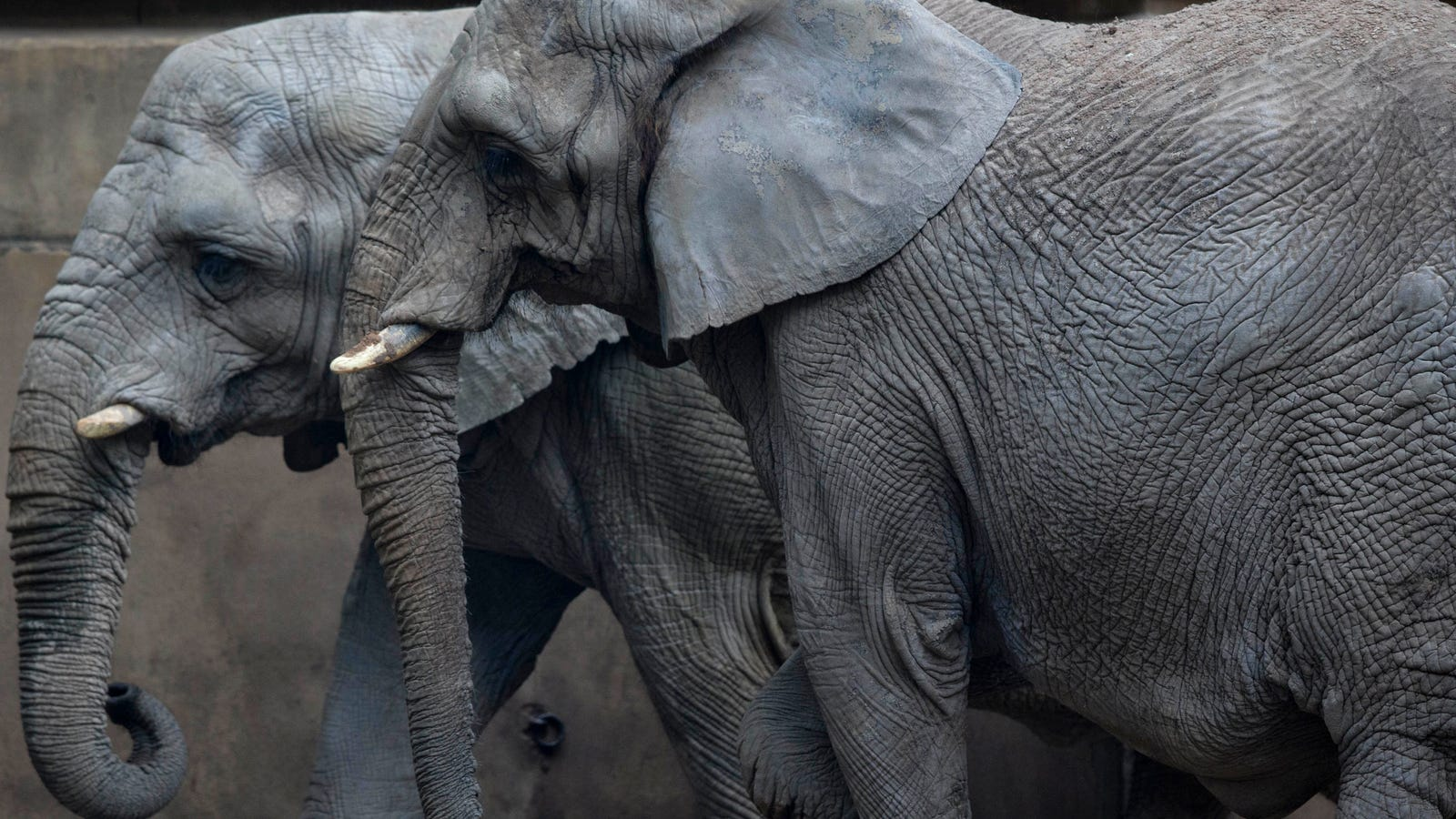 Connecticut Lawsuit Is the First to Claim Elephants as Legal Persons