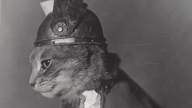 Ogle These Vintage Public-Domain Cat Pictures From the Library of Congress