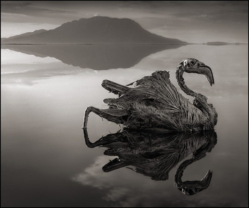 Illustration for article titled Any Animal That Touches This Lethal Lake Turns to Stone