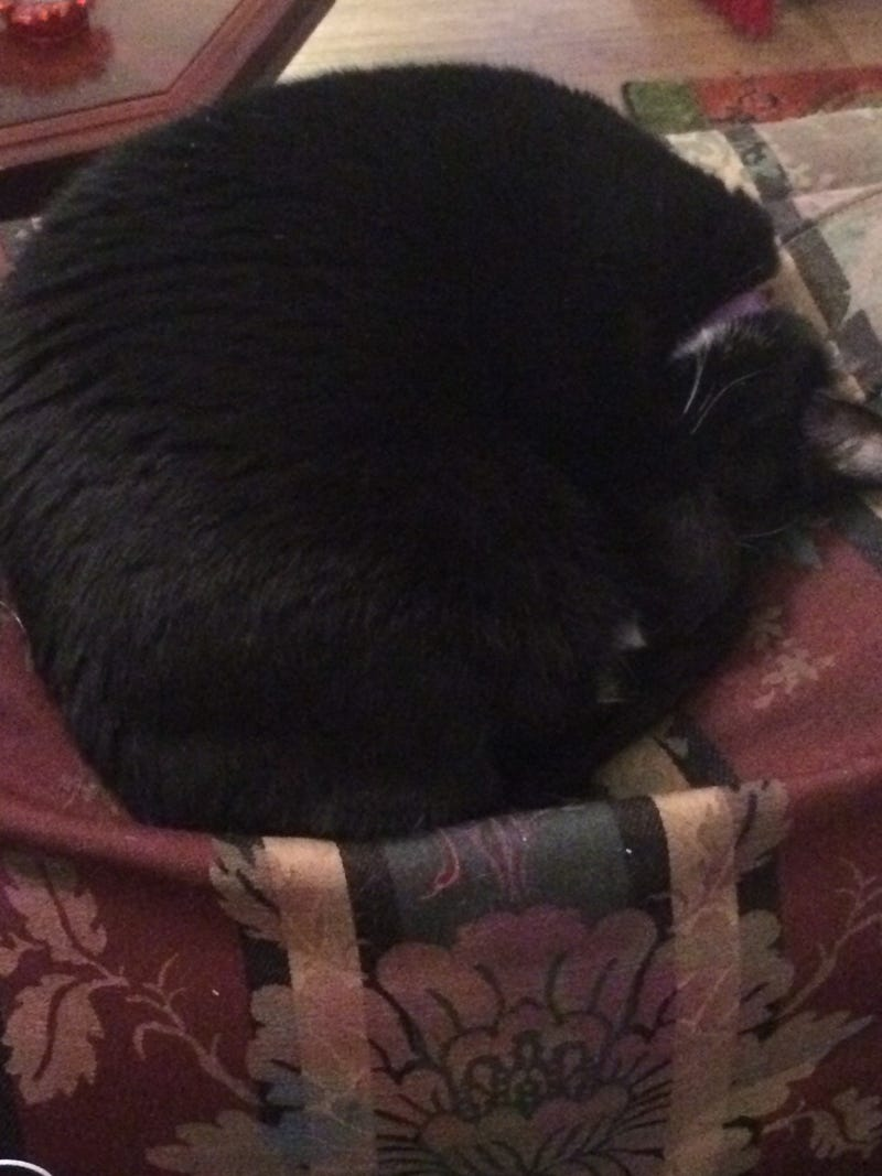 Illustration for article titled My cat looks like a furry doughnut hole. Presented w/o further comment