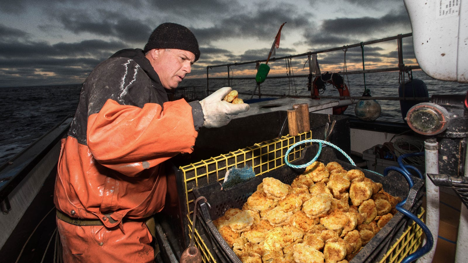 Red Lobster Criticized For Decimating Biscuit Populations Along Cheddar Bay