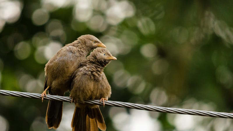 uditha wickramanayaka/flickr