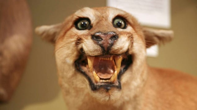 10 Truly Bizarre Stories About Taxidermy