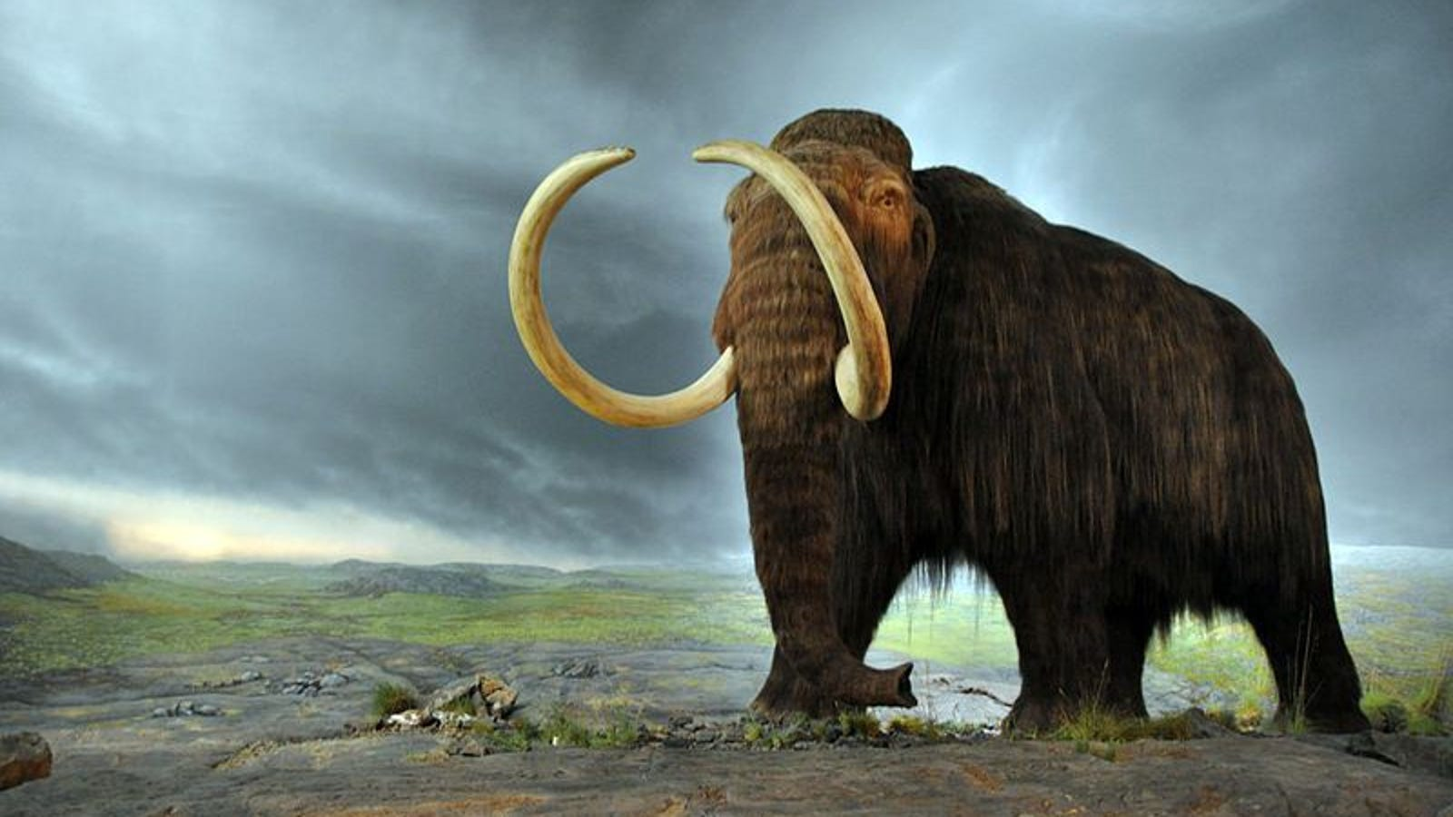 Should we start de-extincting species that have died out?