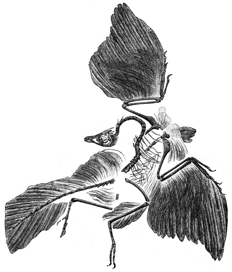 Illustration for article titled 'Oldest Bird' Not Actually Bird