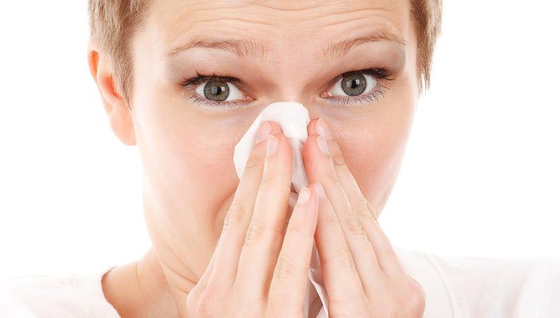 Illustration for article titled Por qué cuando te resfrías o sufres alergia una mitad de la nariz siempre está más congestionada que la otra