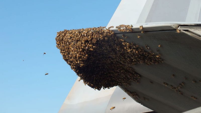 f 22 raptor gets owned by a bunch of honey bees