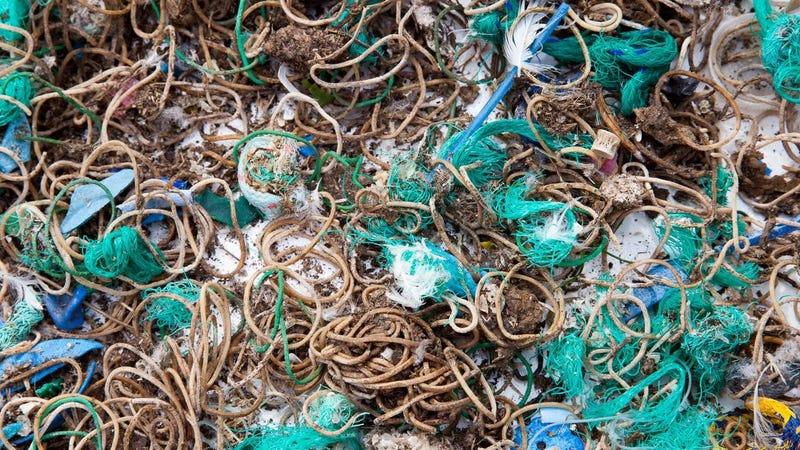 Elastic bands and fishing waste found on Mullion island.