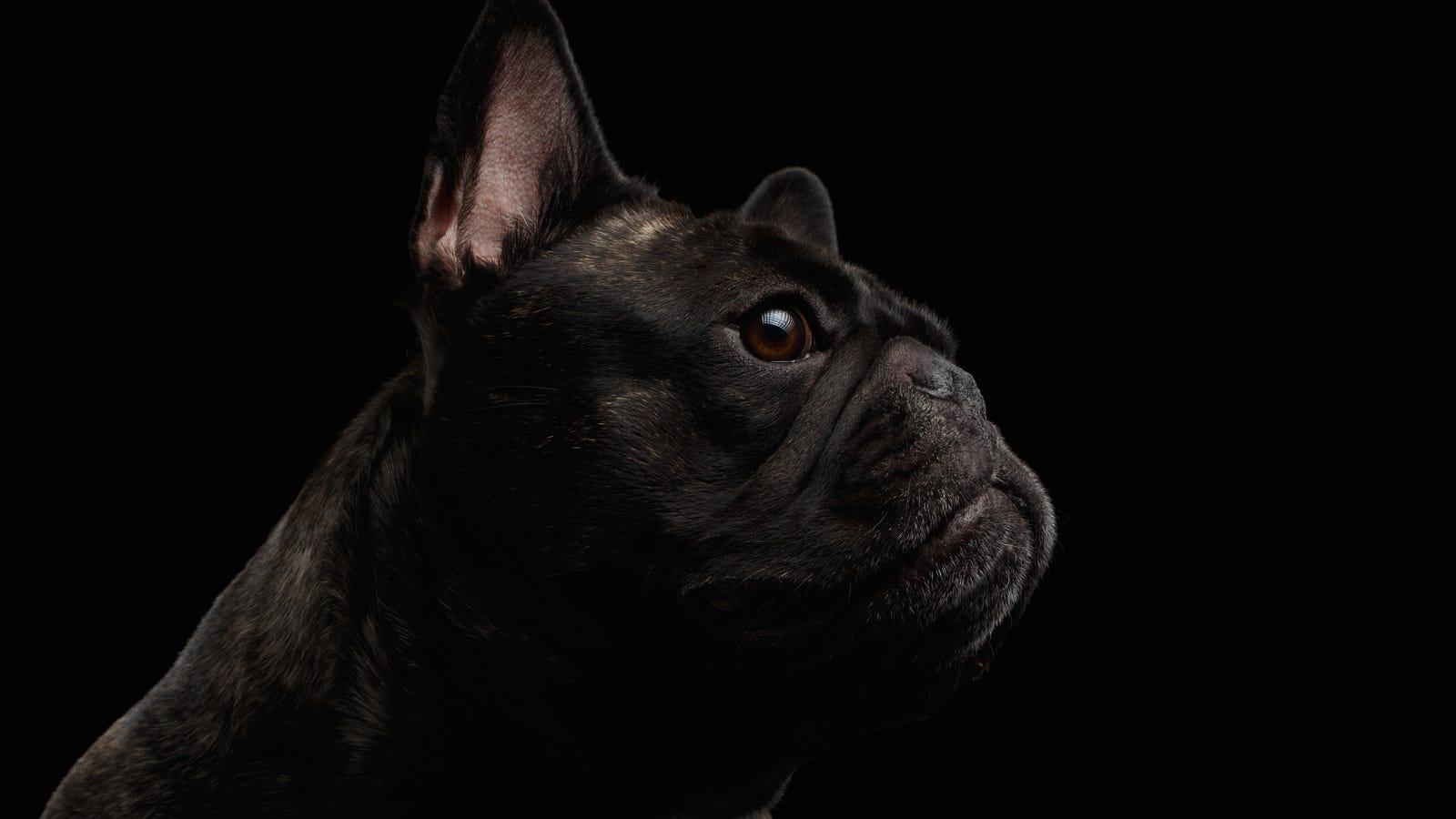 El día que los rusos crearon perros con dos cabezas y los resucitaban de entre los muertos