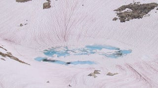 Illustration for article titled What Creates These Bright Pink Streaks in the Snow?