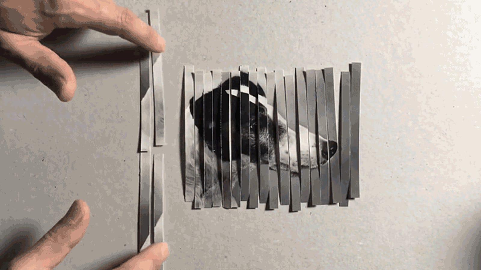 Esta ilusión óptica multiplica perros como por arte de magia y además te enseña cómo funciona Photoshop
