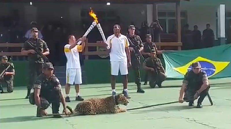 Illustration for article titled Llevan a un jaguar a una ceremonia de los juegos olímpicos y acaban matándolo a tiros