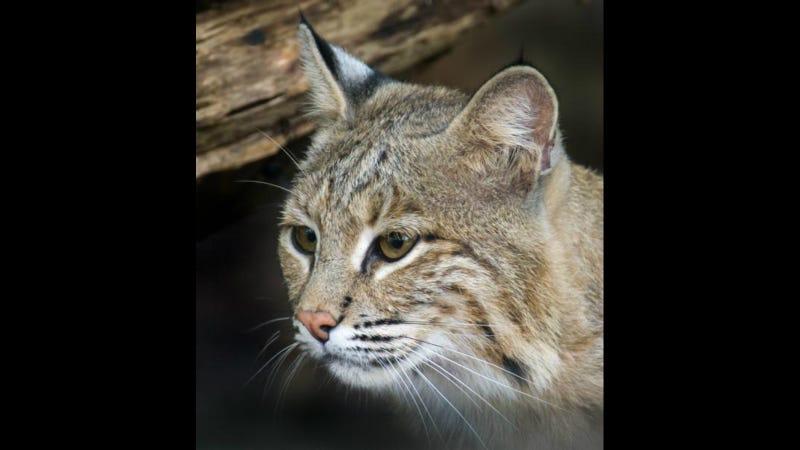Image via Smithsonian National Zoo