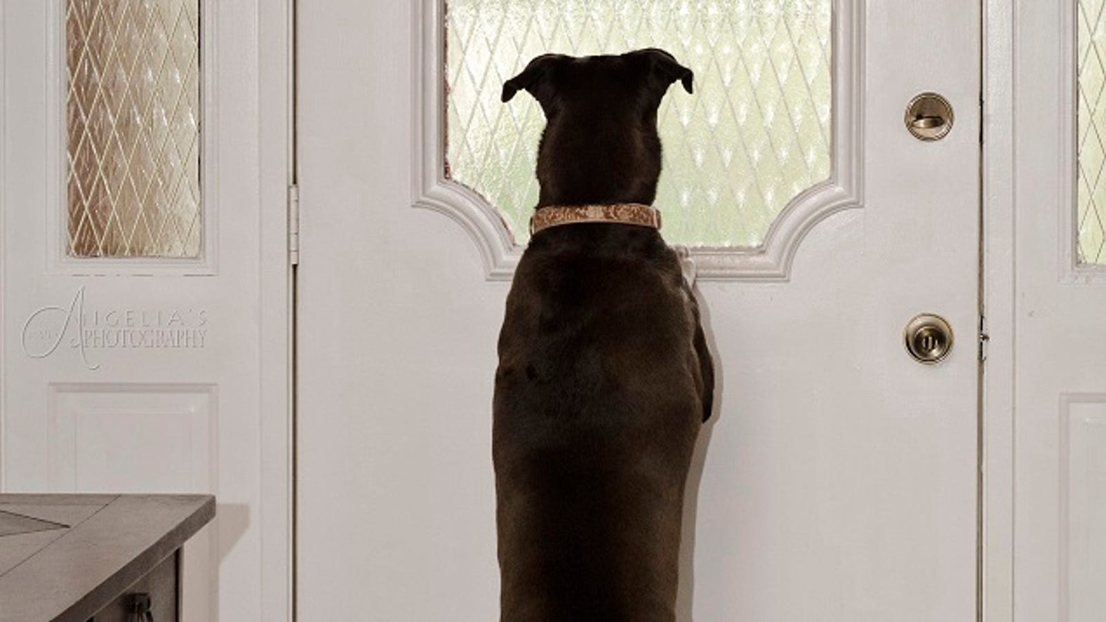 Stop Your Dog From Barking When Youre Away With A Little Treat Training