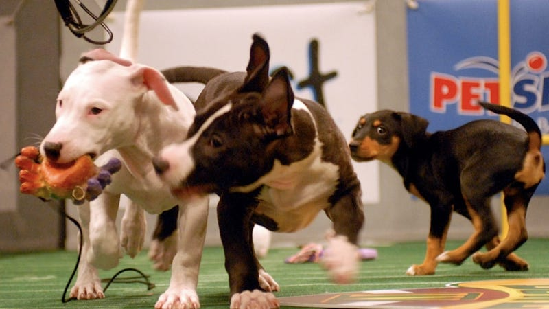 Illustration for article titled This Is How the Puppy Bowl Sausage Gets Made
