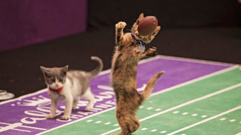 Illustration for article titled Hallmark Channel launches all-kitten football league, opening door to all-kitten doping scandal