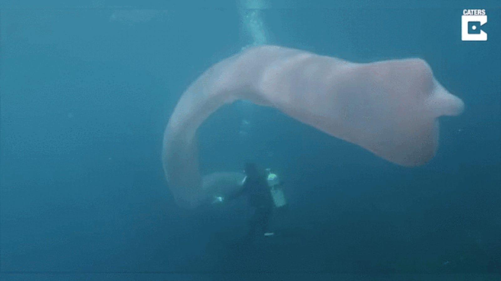 """Qué es en realidad esta extraña y gigantesca criatura marina de 9 metros apodada el """"unicornio del mar"""""""