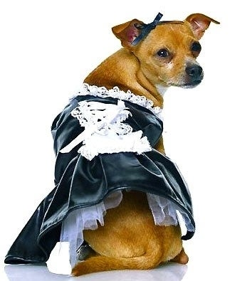 Illustration for article titled The 40 Sluttiest Dog Halloween Costumes