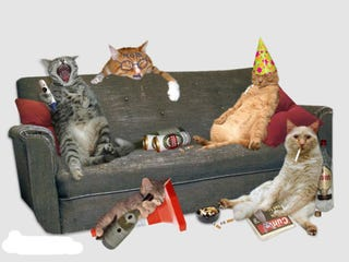 Illustration for article titled The party animals are gone!