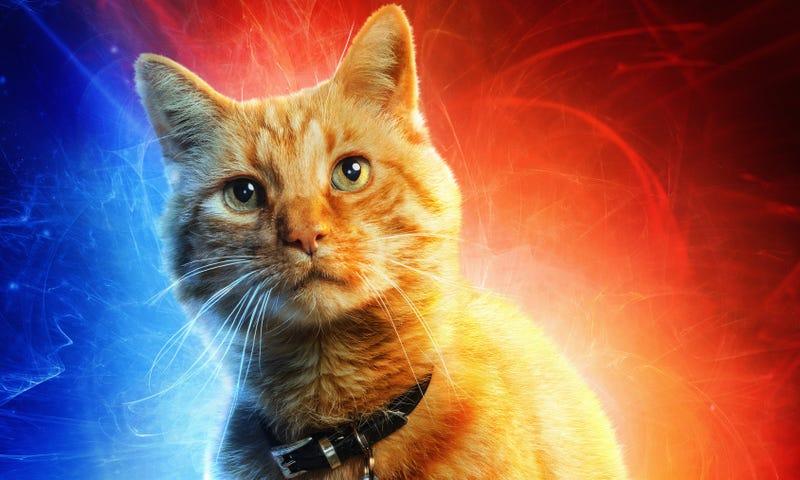 Goose, el gato de la Capitana Marvel.