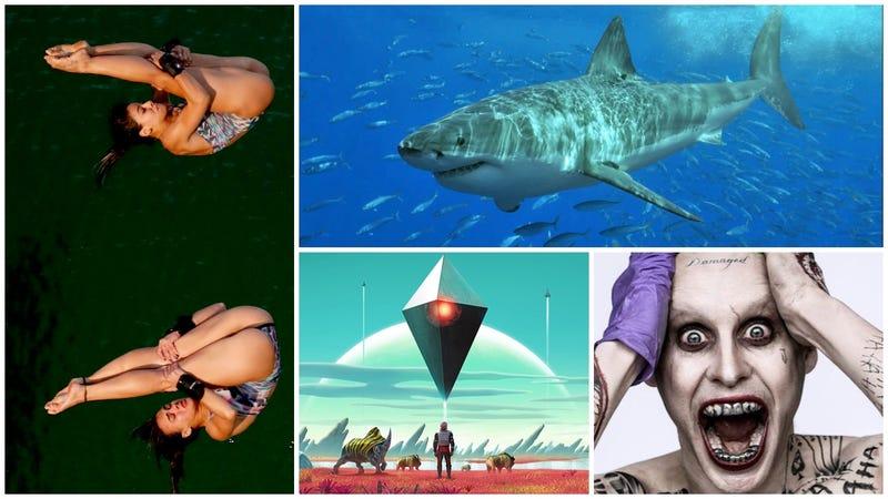 Illustration for article titled Piscinas verdes, tiburones que tuvieron una mala digestión y el Joker. Lo mejor de la semana