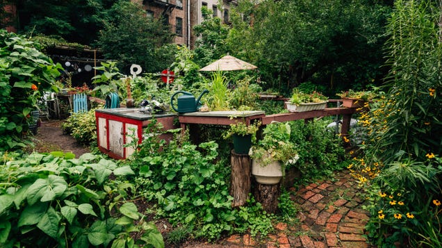 How to Join a Community Garden