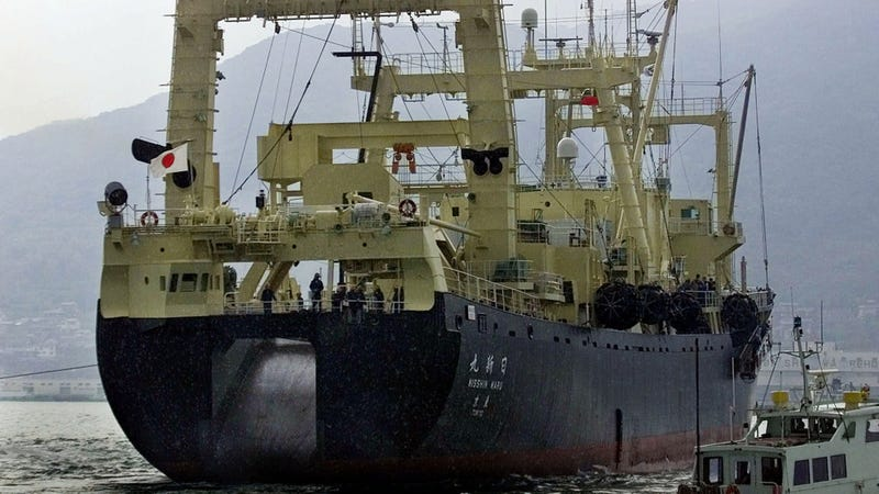 "Japanese whaling ship ""Nisshin Maru"" leaves the port of Shimonoseki, southwestern Japan, in this Nov. 17, 2000 file photo."
