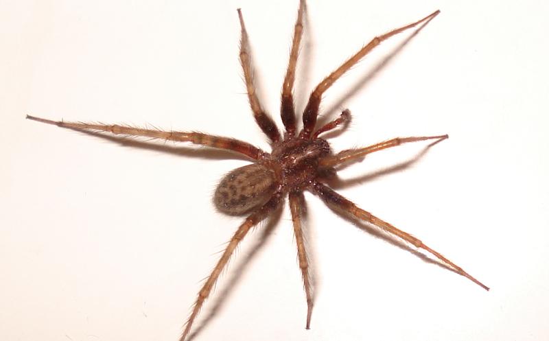 Acude al médico por un extraño picor en la cabeza y le encuentran una araña anidando en el interior del oído