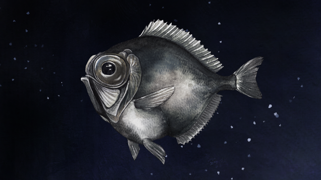 Some Deep-Sea Fish Can See Color in Near Total Darkness