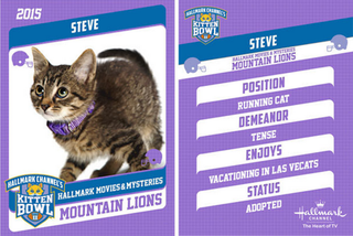 Illustration for article titled Steveghazi: Controversy at the Kitten Bowl!