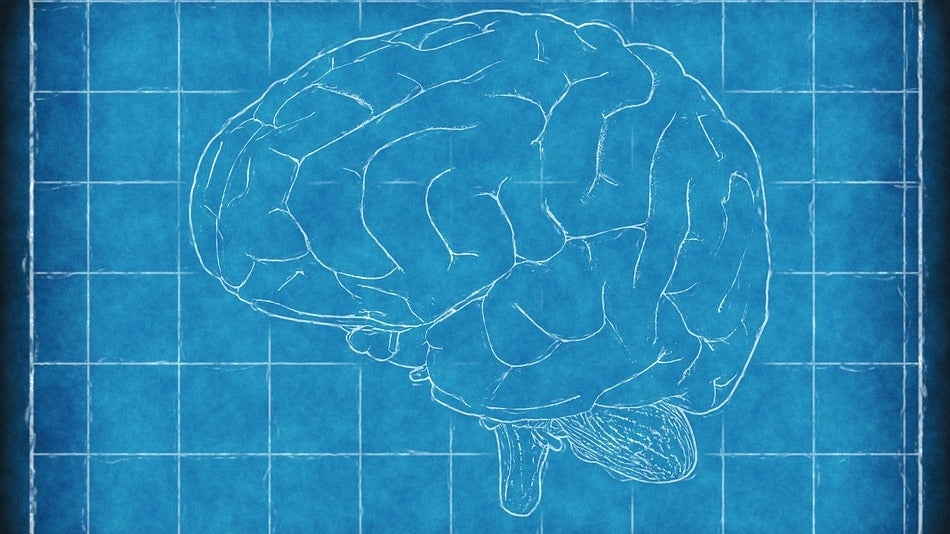 brains feature genetics mental-health