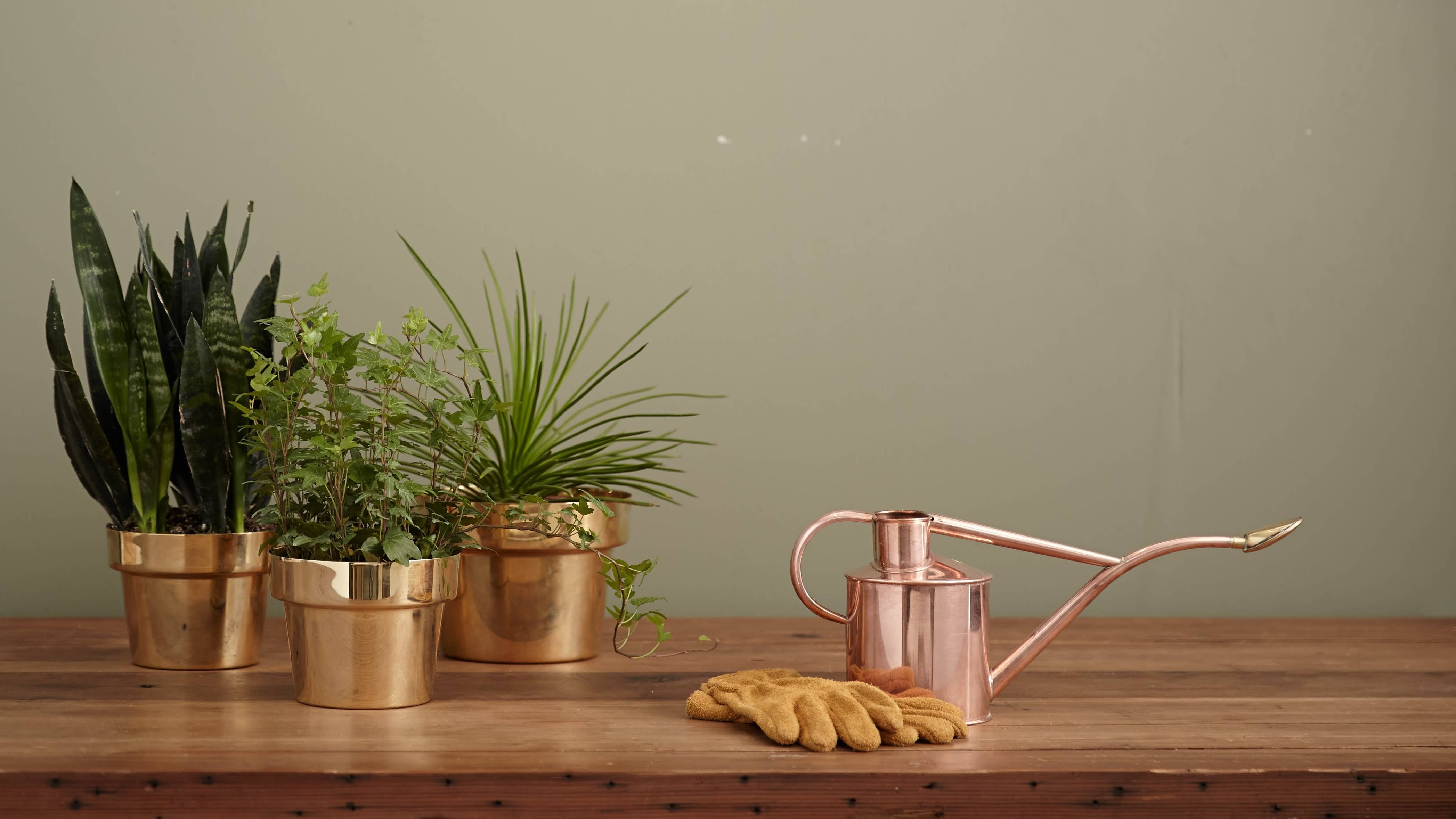 How To Create A Simple Plant-Watering Schedule