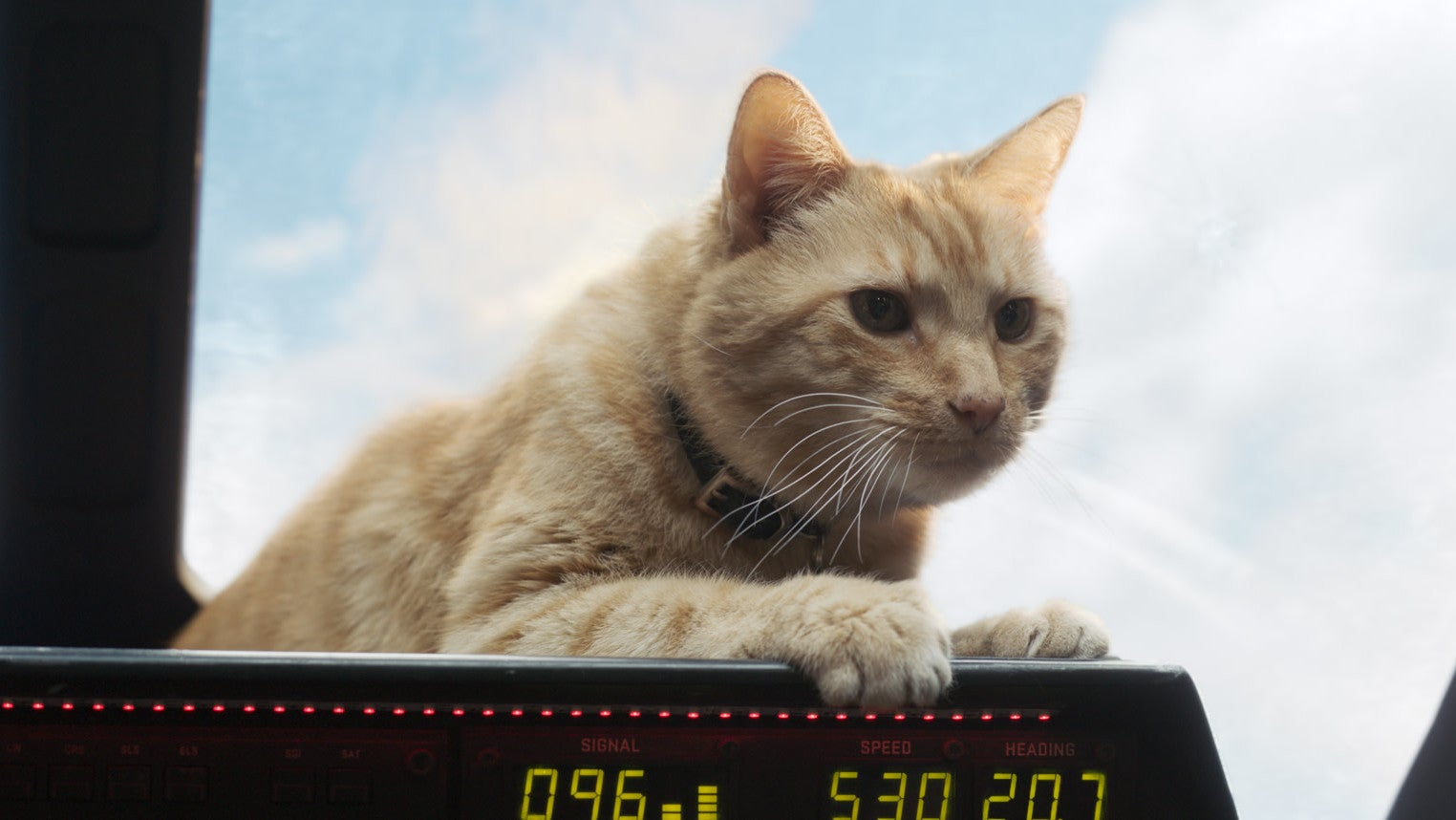 captain-marvel cats goose io9 marvel marvel-cinematic-universe marvel-studios post-credits-scenes video