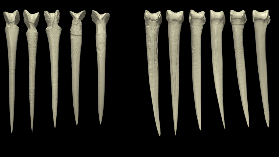 anthropology archaeology art bone-daggers bones daggers new-guinea symbolic-weapons weapons