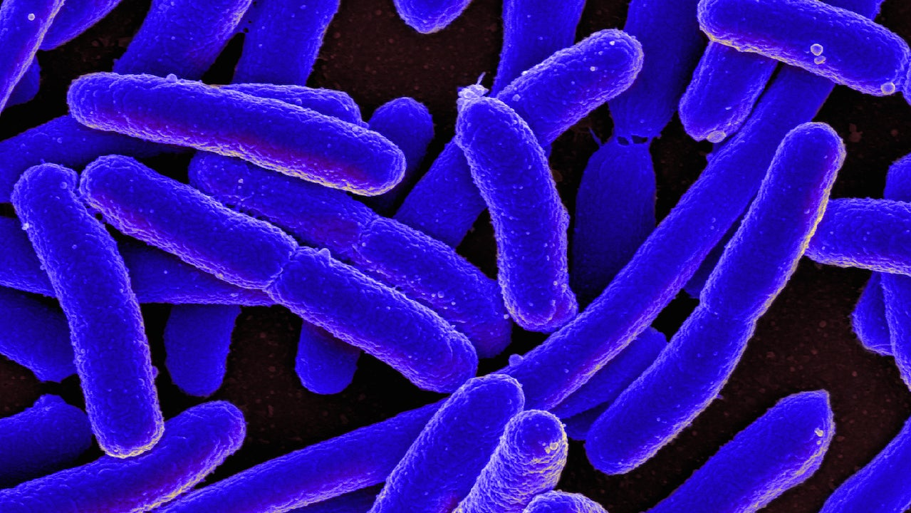 A Little-Known CRISPR Technique Could Be The Key To Fighting Deadly Superbugs