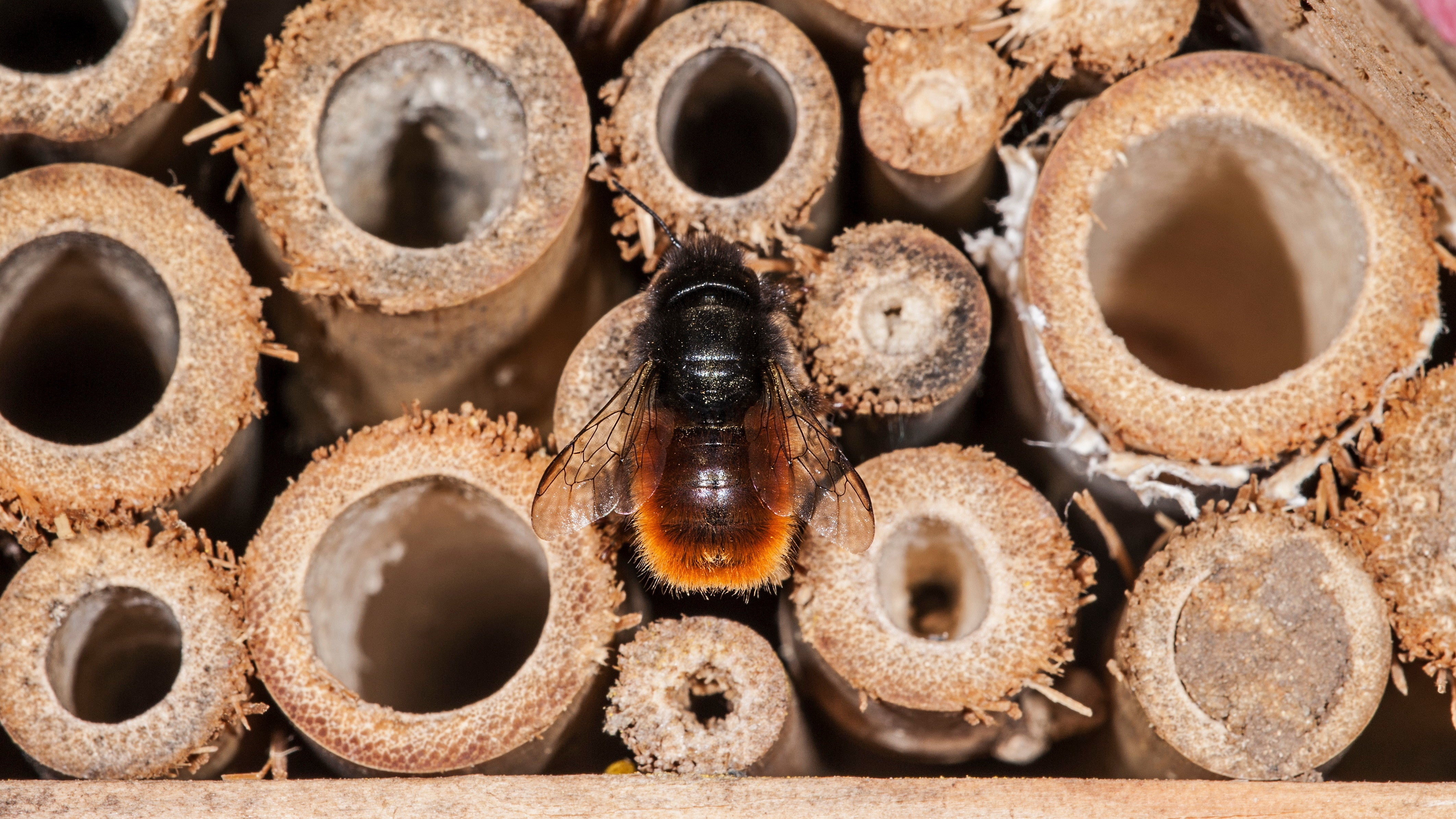 How To Correctly Set Up A Solitary Bee House