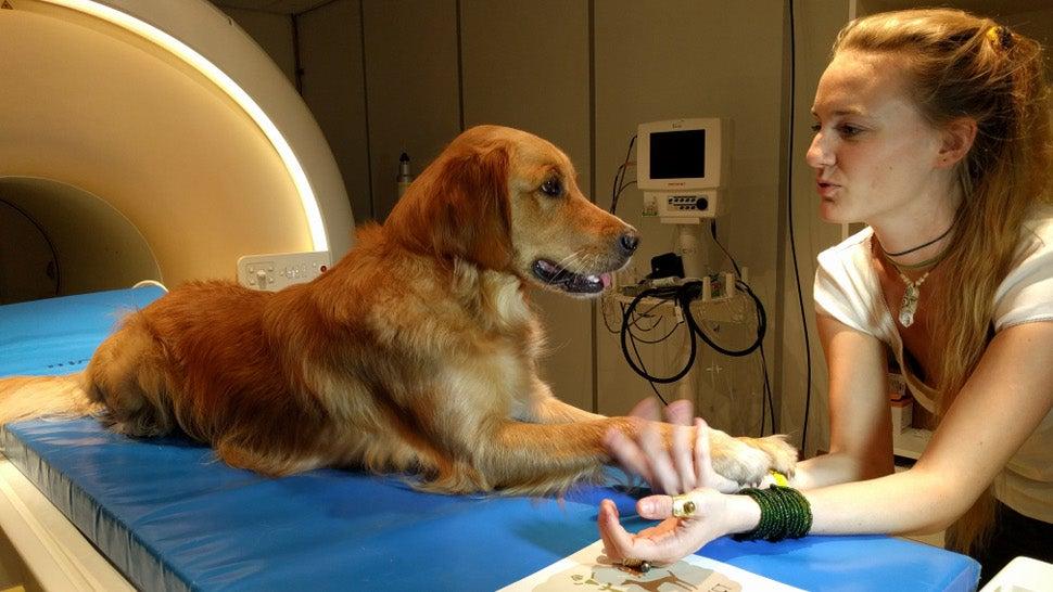 animal-intelligence biology dogs intonation language