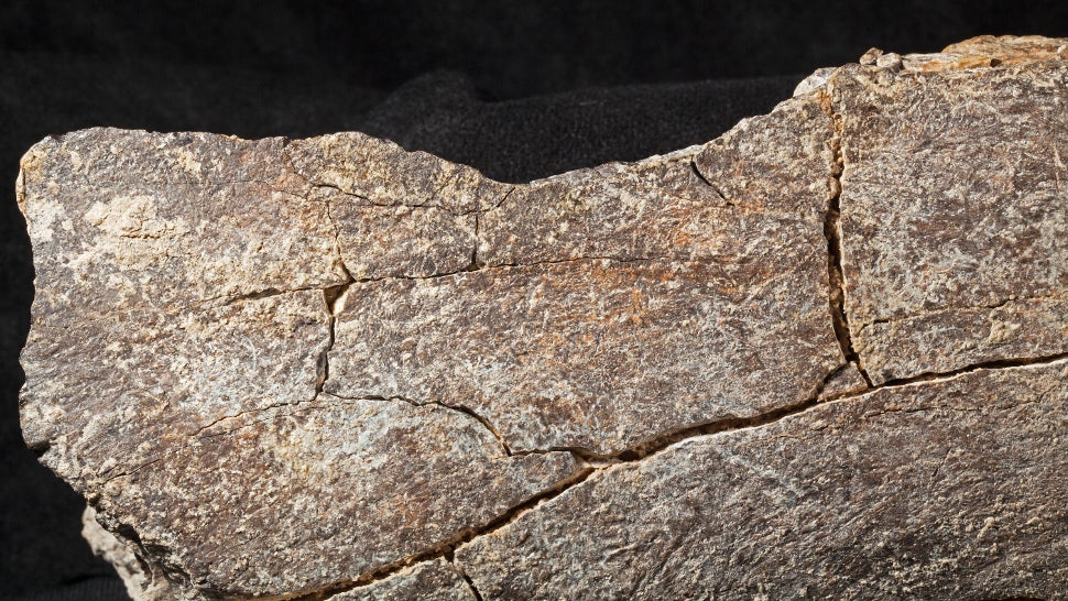 Controversial Study Makes A Staggering Claim About When The First Humans Settled North America