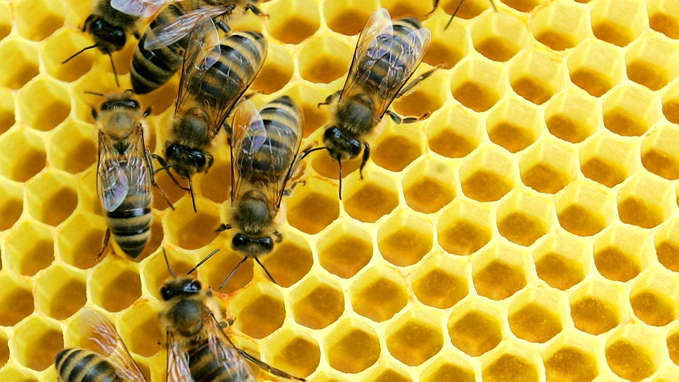 A Third Of America's Bee Colonies Died Last Year And That's 'Good News'?