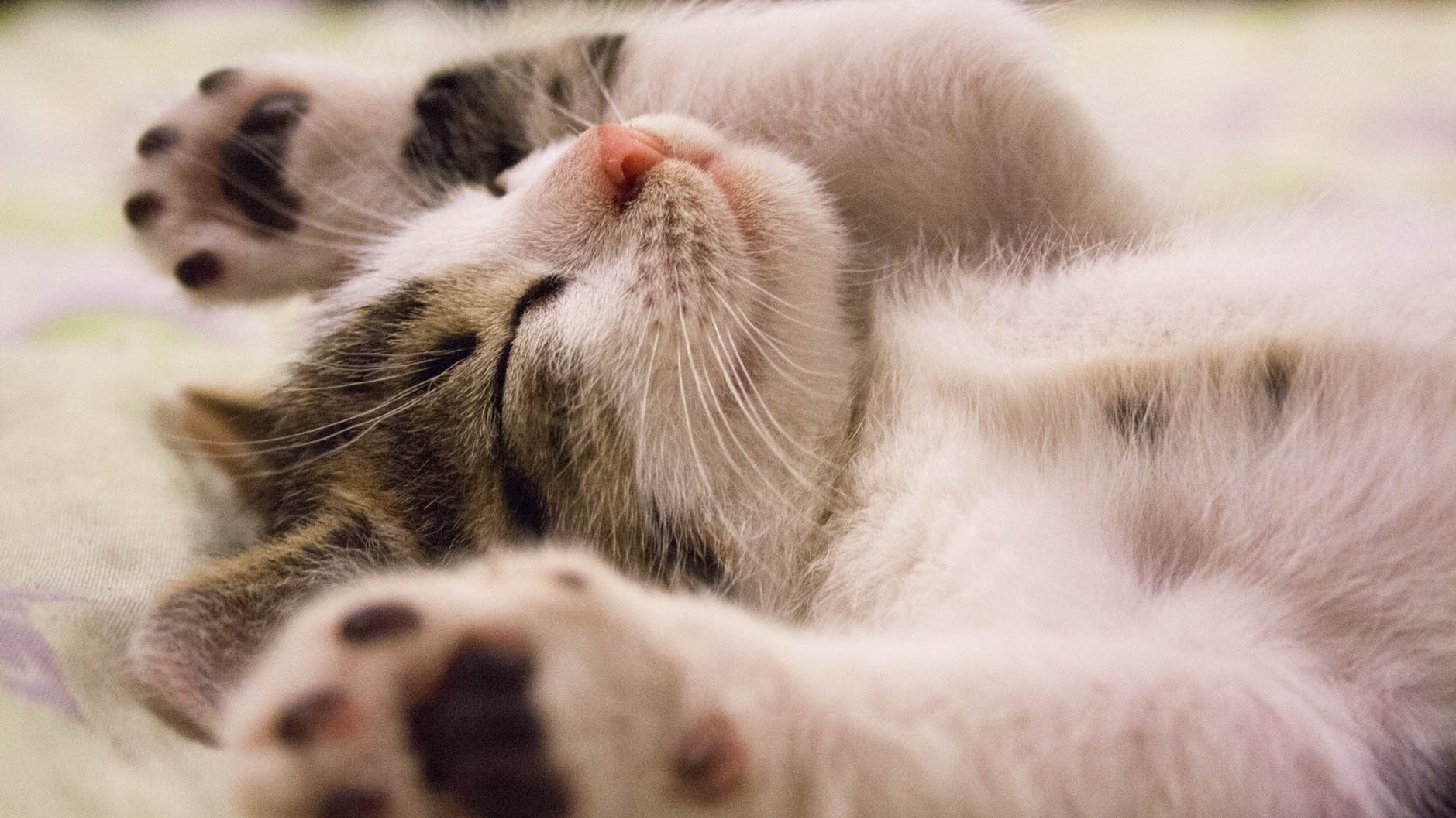 Help Your Cat Deal With Separation Anxiety With This Netflix For Cats Site