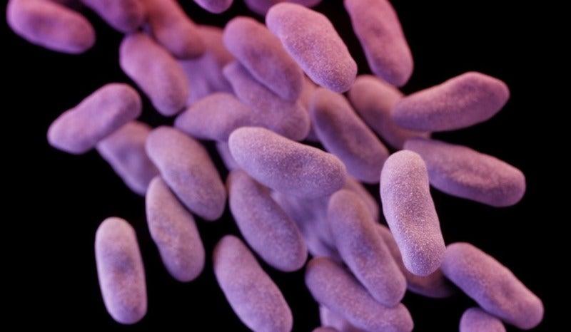 antibiotics cdc e-coli health public-health superbugs