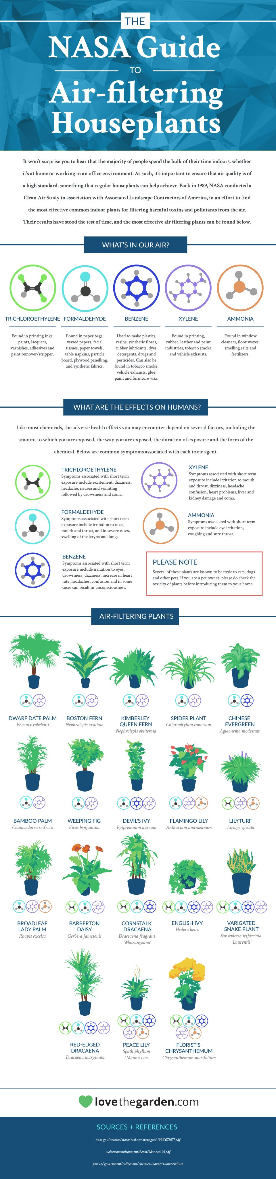 This Graphic Shows The Best Air-Cleaning Plants, According ...