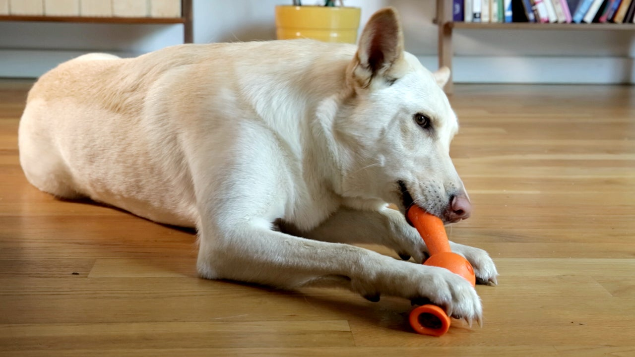 Treat-Dispensing Chew Toys That Fit Your Dog's Tennis Ball Launcher