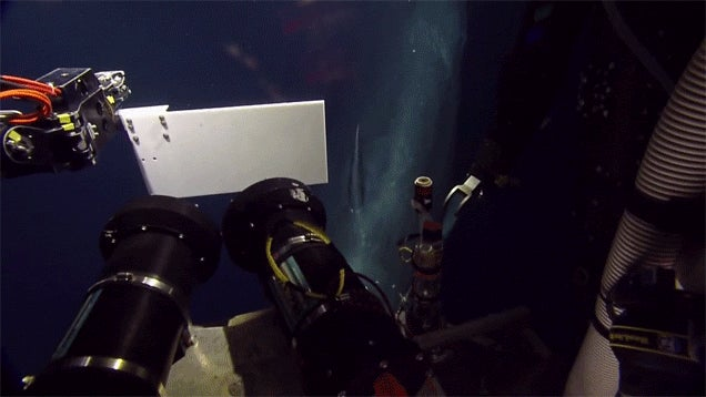 This Robot's Rare Encounter With a Sperm Whale Gave Me Goosebumps