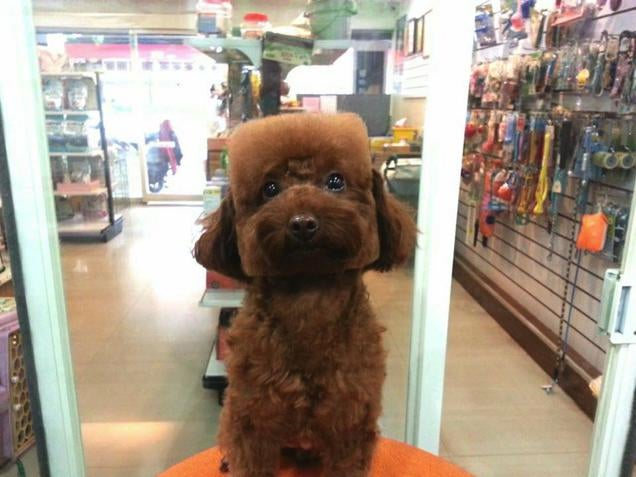 People, Don't Turn Your Dog into Real-Life Minecraft