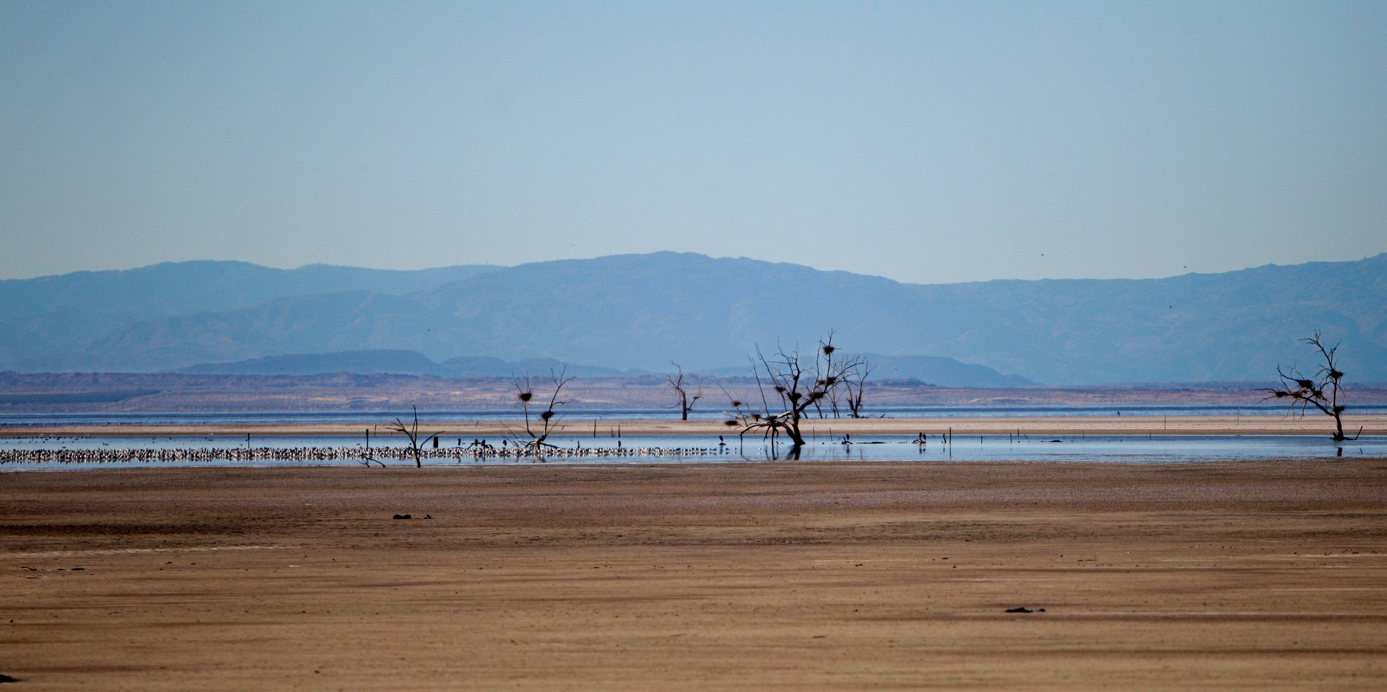 California's Drought Is Making Its Dying Inland Sea Even More Toxic